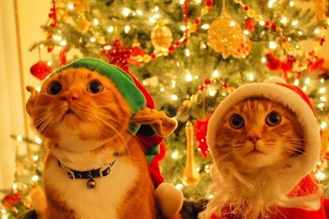 Чем заняться на выходные в минске на рождество, 25 декабря